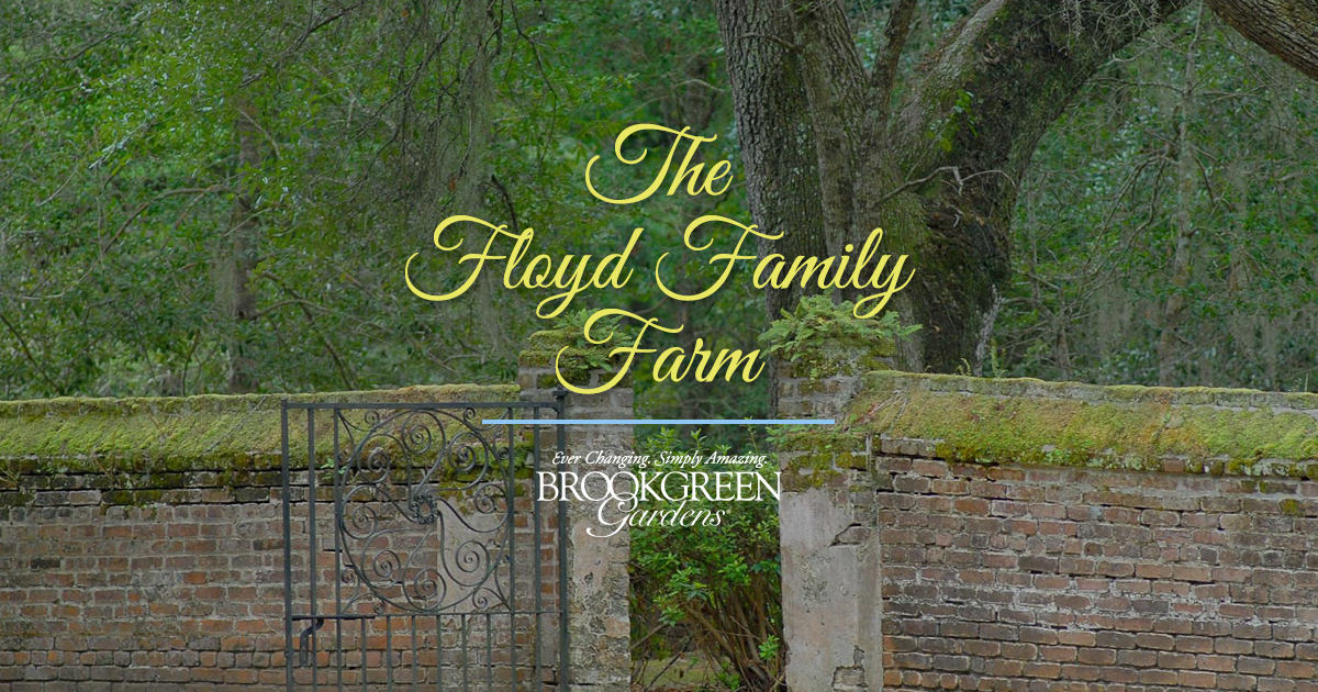 Floyd Domestic Animals of the Plantation - Brookgreen Gardens